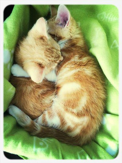 Unsere Katzenbabys :) First Eyeem Photo