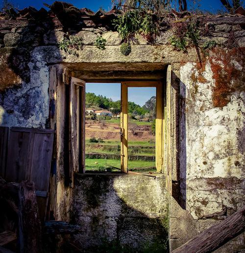 Tree Open Door