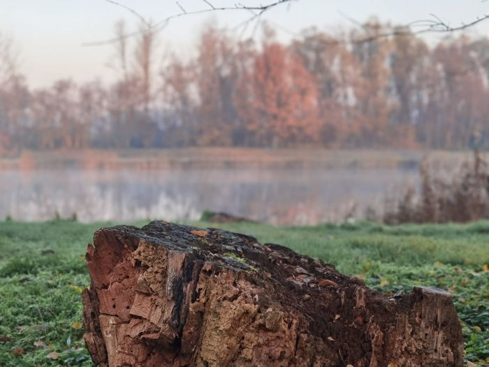 Close-up of log on field by lake