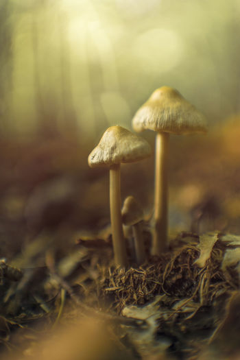 Mushroom family in the woods Dreamy Fairy Family Grow Leafs Mushrooms New Life Sun Sunshine Together Woods