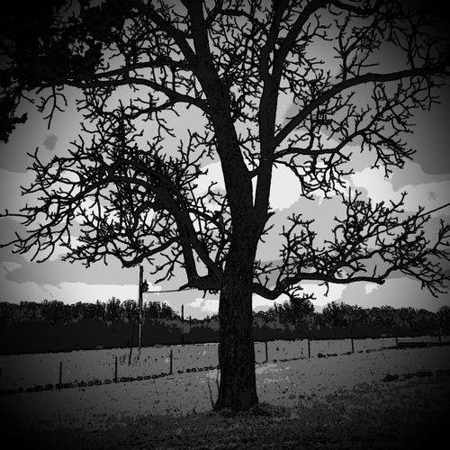 Monotone Missouri Ozarks United States Bare Tree Errie Gothic Halloween Scarey Forelorn Lonely Sad Dramatic Tree Nature Sky Silhouette Outdoors Branch Growth No People Scenics Day