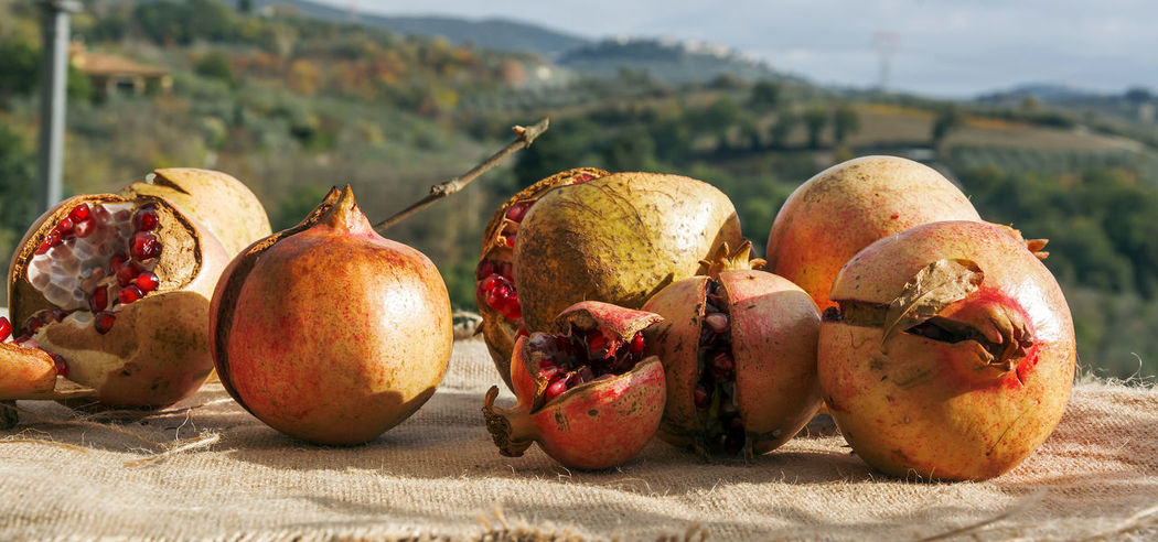 Pomegranates  Bad Condition Close-up Countryside Day Focus On Foreground Food Food And Drink Freshness Fruit Fruits Healthy Healthy Eating Nature No People Outdoors Pomegranate Rotten Rotting Sunlight