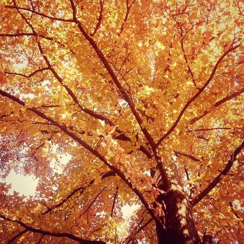 冬日里满树的秋。 First Eyeem Photo