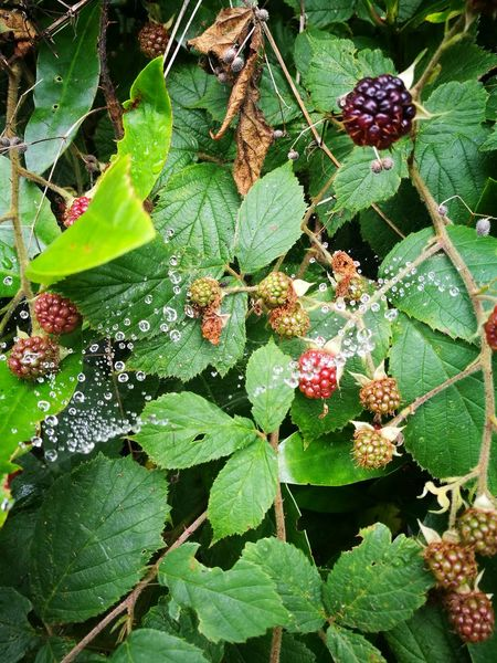 Summer Ending Outdoors Fruit Growth Rotting Away