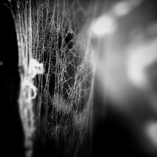 Cobwebs on a fountain at the Tivoli Gardens, Italy Tivoli Garden Shootermag NEM Memories NEM Black&white