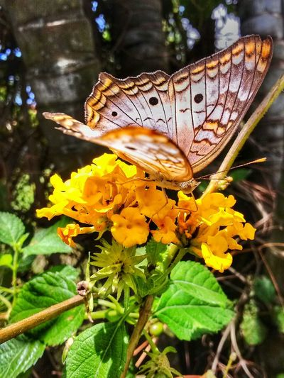 Running behind it to get this shot was worth it! Flower Fragility Butterfly - Insect Freshness Growth Yellow Nature Pet Portraits Focus On Foreground Day Animal Themes Animals In The Wild Insect Plant Outdoors Beauty In Nature Flower Head Leaf Mezzomix EyeEm Nature Lover Mix Yourself A Good Time Eyeemphotography EyeEmNewHere Be. Ready. One Animal Butterfly No People Animal Wildlife Close-up Spread Wings
