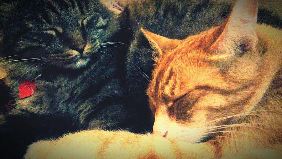 Cats мойличныйкусоксолнца детиспят