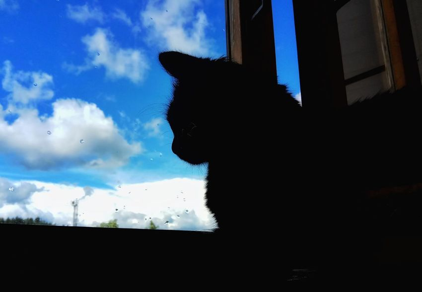 My Giolletta 🐈 Silhouette Window Sky Day Domestic Cat Domestic Animals Animal Themes Animal Photography Nature_collection Nature Photography I Like It Phone Photography Black Cat Black Cat Photography Animal Portrait Nice Photo Nice View Beatiful View Cat Photography Black Cat Collection I LOVE PHOTOGRAPHY Black Cat Is Just So Beautiful. My Favorite Photo Black Color Nice Cat