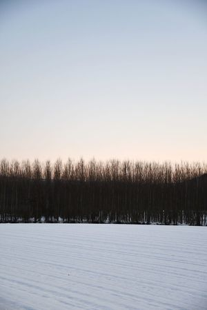 Langhe Snowscape Snowy Field Rows Of Trees Sunset Snowy Sunset Tranquility Silence Travel Destinations Frozen Nature Cold Temperature Winter Tree Snow Nature No People Frozen Sky Scenics Outdoors Beauty In Nature