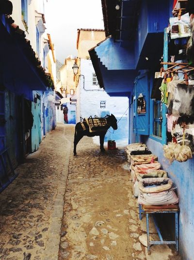 Street Photography Donkey Beautiful Town Chefchaouen Morocco Blue City A Lovely Place Chefchaouen Medina Chefchaouen Rif Mountains Morocco Blues