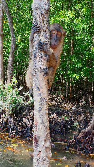Koh Lanta Holiday Memories POVshots Mangrove Life Mangrove Forest Canoing Happy Holidays! Monkey