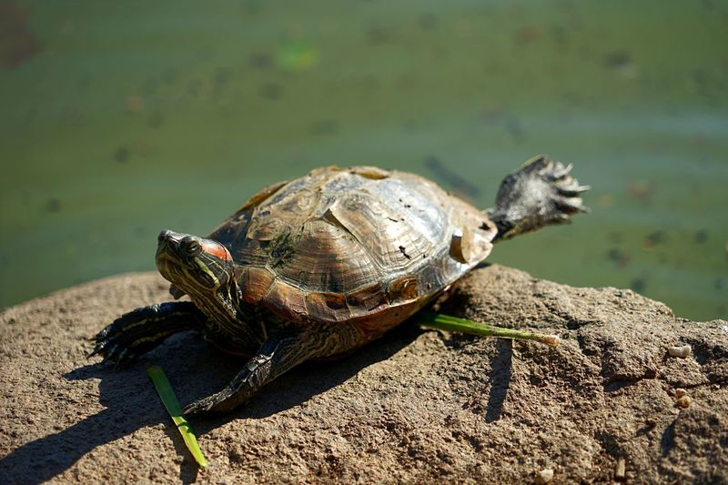 Turtle in the