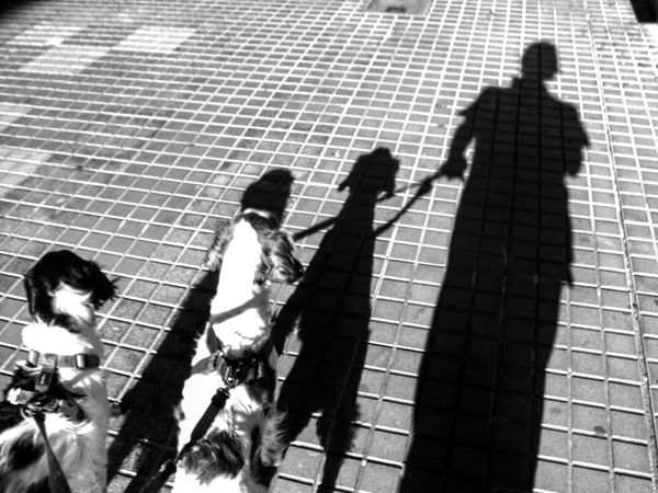 ShadowSelfie Shadow Shadows Shadowself Dogs Of EyeEm Dogs Brittanyspaniels Brittany Spaniel Hanging Out Streetphotography Monochrome Bnw_lover Bnw_captures Monochromatic Black And White Blackandwhite Photography Black & White Check This Out Bnw_maniac Monochrome_life Bnw_collection