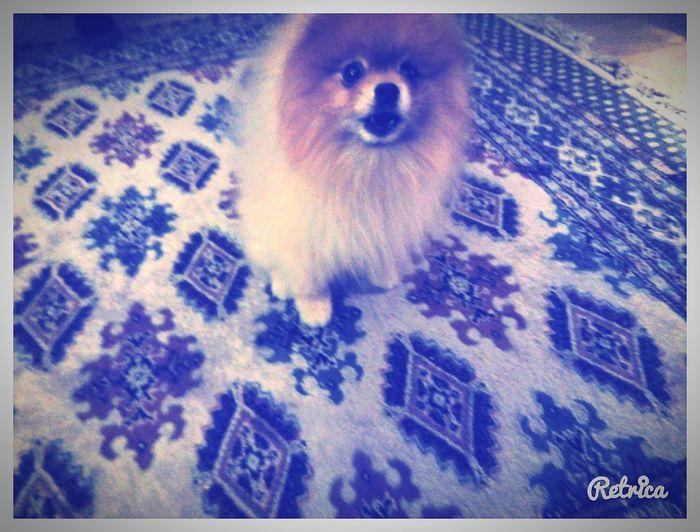 Собака моя