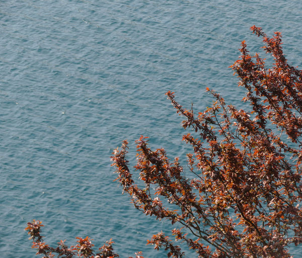 High angle view of flowering tree by sea