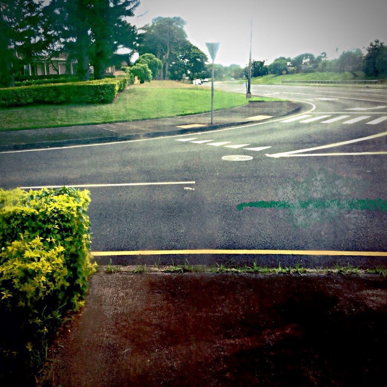 road, transportation, plant, symbol, sign, road marking, marking, nature, no people, tree, day, outdoors, city, asphalt, land, mode of transportation, street, sky, direction, landscape, dividing line