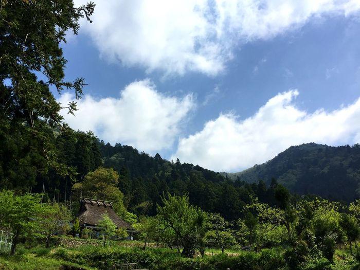 美山かやぶきの里 Miyamakayabukinosato 茅葺き屋根 美山かやぶきの里 Miyamakayabukinosato Kyoto Kyoto,japan Tree Plant Sky Cloud - Sky Beauty In Nature Growth Green Color No People Mountain Forest