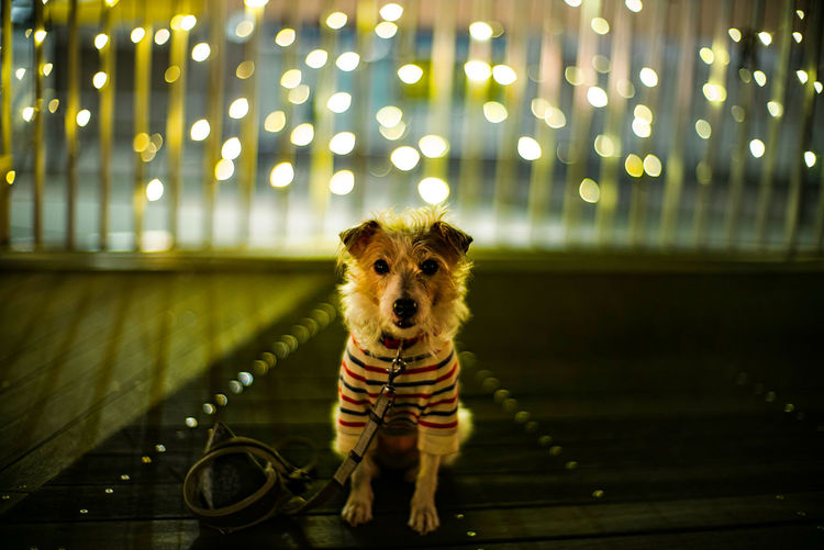 Portrait of dog standing at night