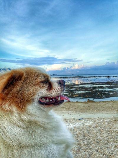 Bong Beach Bìnhbaisland