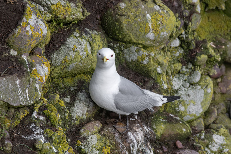 High angle view of seagull on rock