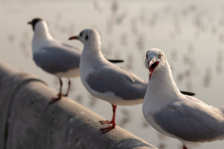 Close-up of seagulls perching on railing in row
