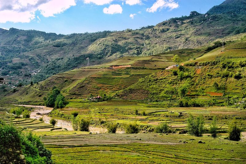 Vietnam sapa Growth Landscape Plant Tranquility Beauty In Nature Environment Scenics - Nature Tranquil Scene Mountain Land Tree Nature Agriculture Day Sky Field No People Green Color Rural Scene Cloud - Sky