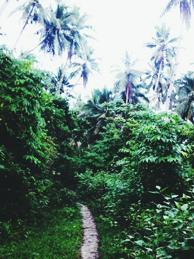 🌿 A trip to the jungle. I wasn't really able to take shots because this place is enchanted inhabited by elementals. Tree Growth Nature Plant No People Outdoors Day Palm Tree Beauty In Nature Sky Freshness Hiking Adventures EyeEm Nature Lover Tropical Climate Earth Day 2k17