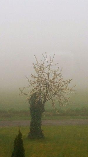Nebel Schlechtes Wetter