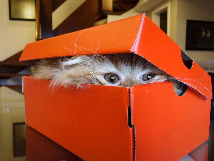 My cat (and my model!) making a surprise! Indoors  Hiding Close-up Cardboard Box Childhood Animal Themes Mammal Cat Cat Lovers Red Box Surprise Gift