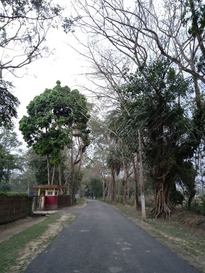 Empty road amidst trees against sky in city