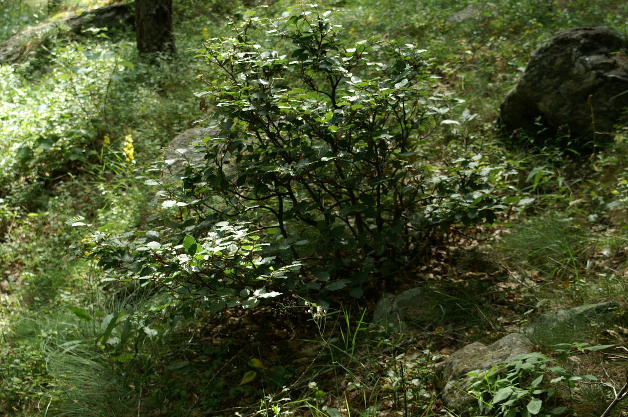 TREES AND PLANTS GROWING IN FOREST
