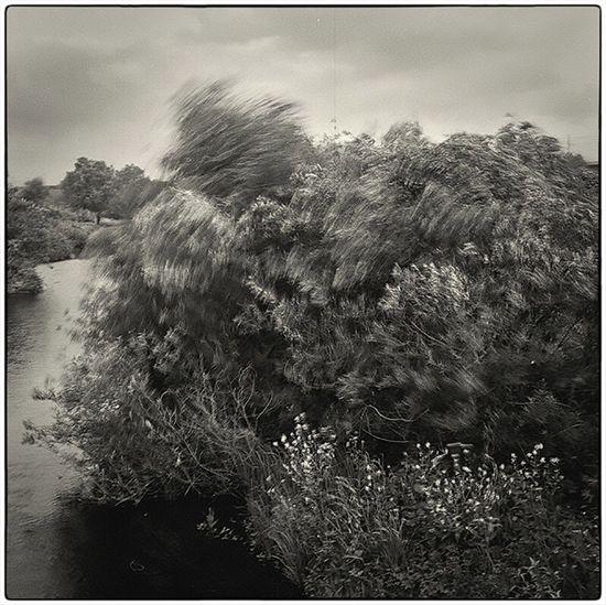 Tree Wndy Day Slow Shutter 6x6 Blackandwhite Photography