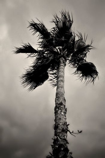 Simple ... 🚶🏻 Tadaa Community The Florida Files Monochrome Taking Photos From My Point Of View Der Reisende Black & White Blackandwhite EyeEm Nature Lover IPhoneography
