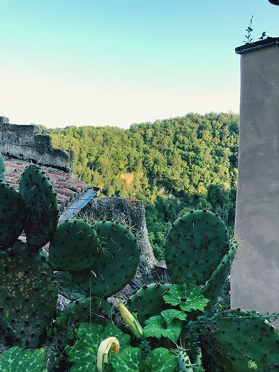 Shades of green Italy Calcata Green Color Flower Zucchini Prickly Pear Cactus Fichid'india Sky Plant Growth Nature Beauty In Nature Landscape No People Succulent Plant Cactus