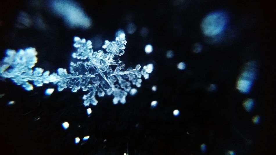 Night Snow Snowflake Winter No People Snowing Cold Temperature Nature Ice Winter Photo Frozen Photography Outdoors Detailphotography Macro Macro Snowflake Detail