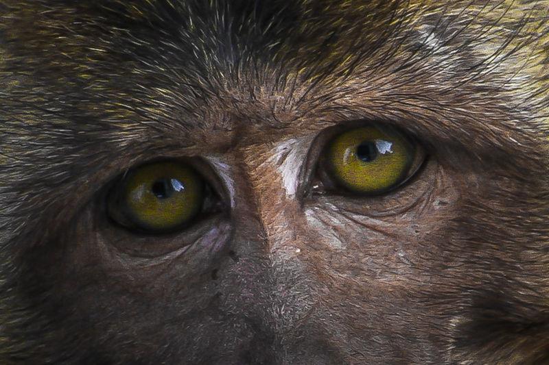 Face, Eyes, Look, Momkey,Animals First Eyeem Photo