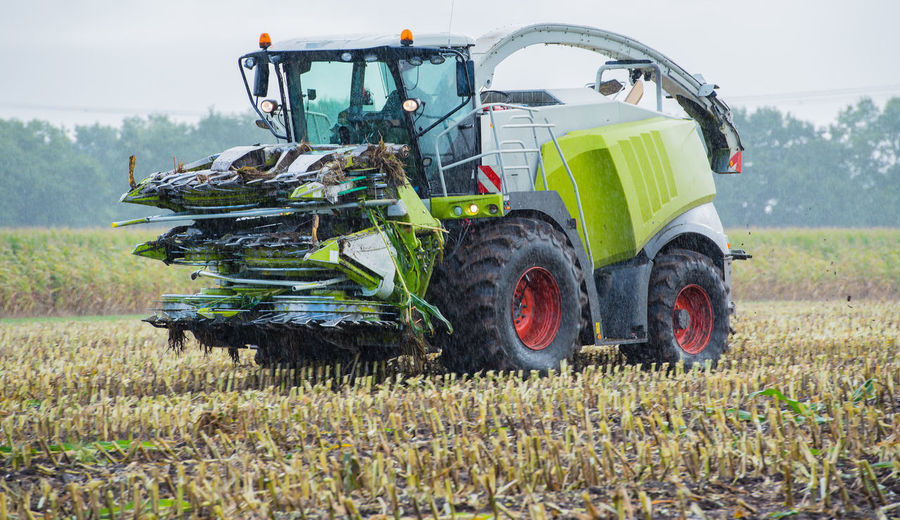 Corn harvest, corn forage harvester in action, harvest truck with tractor Agricultural Photo Agriculture Bio Corn Bit Corn Harvester Farmer Field Forage Harvester Machine Maize Silage Tractor Transport Agricultural Biogas Biogas Plant Corn Corn Harvest Cornfield Cultivation Cutting Tool Harvest Silo Scales