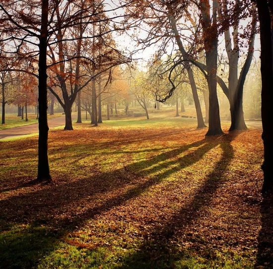 Tree Nature Beauty In Nature Growth Sunlight Autumn Tranquility Change Tranquil Scene Scenics Outdoors Field No People Day Sky