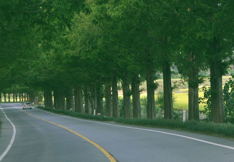 Photo Tree Nature Roadway