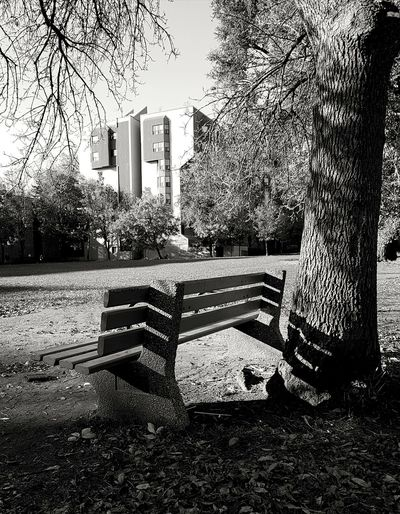 Black And White Black And White Photography Leaves🌿 No People Parkscapes Leaves 🍁
