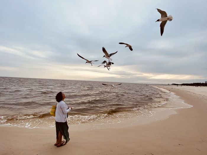 Low angle view of seagulls on beach