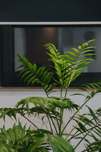 Indoors  Leaves No People Window Leaf Close-up Plant Green Color Window Sill Window Frame Potted Plant Houseplant Pot