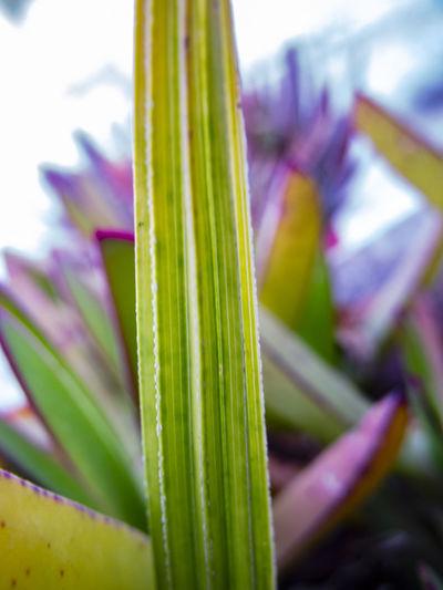 الأعشاب الطبيعية والطبية ليست مجرد معتقدات فولكلورية بل هي تحتوي على مركبات فعالة Les Photographies Nature Les Plus Belles Photos De Nature Nature Images PHOTO & NATURE أعشاب الأعشاب والبذور الطبيعية العشب علمياً عشب