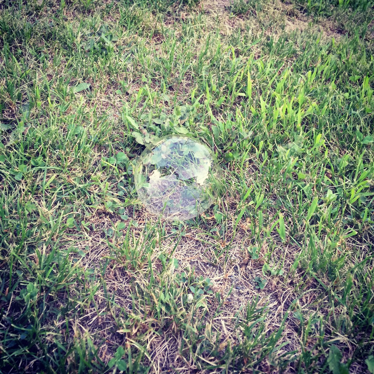 High Angle View Of Bubble On Grassy Field