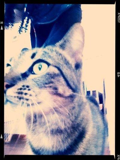 Kitty :)