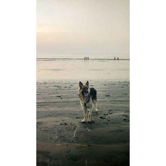 """""""If I have any beliefs about immortality, it is that certain dogs I have known will go to heaven, and very, very few persons."""" Dog Caretaker Love Theonlyloyalbeing Loyal _oye Oyemystory _soi Things2doinmumbai Mymumbai India_clicks Vscocam Moto X Play"""