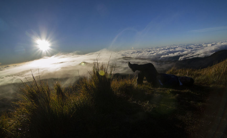 When you're this high, and all problems seem to melt away. 😁 Definitely a Good Morning . Sun Nature Landscape Nature Lovers Nature Appreciation Mountains Pinoy Mountaineer Sunlight No Filter Sea Of clouds Eyeem Philippines Nikonph EyeEmNewHere Nikon Nikon D3100 Mt. Pulag Philippines Beauty In Nature