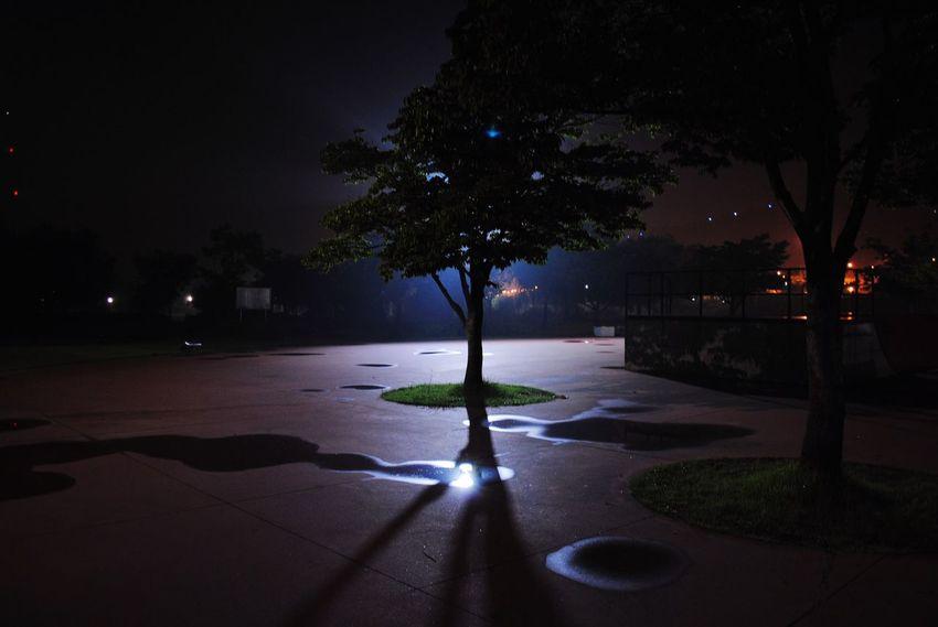 Tree Night Illuminated Nature Backlight Park UFO Light StrangerThings