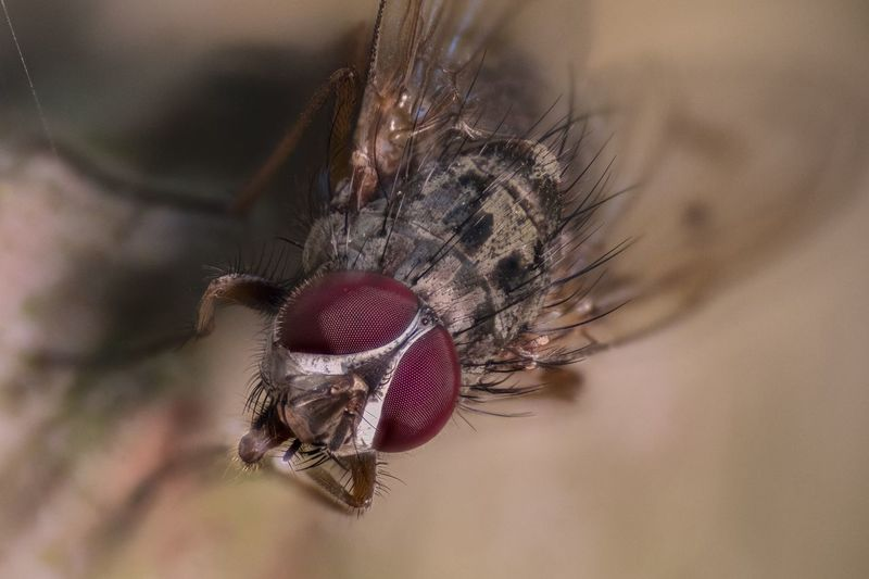 Forest Fly Fly Insect Eyes EyeEm Selects Animal Themes Animal One Animal Invertebrate Insect Animal Wildlife Close-up Extreme Close-up Focus On Foreground Macro Housefly