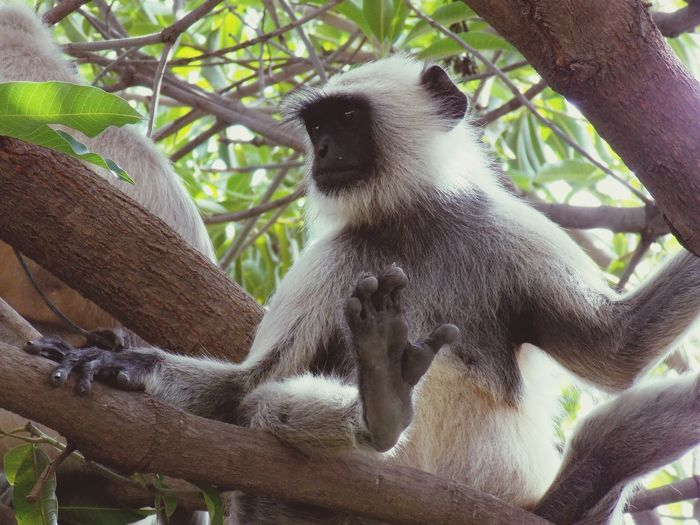 Low angle view of a monkey sitting on tree